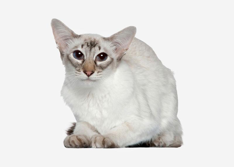 auto cat litter box