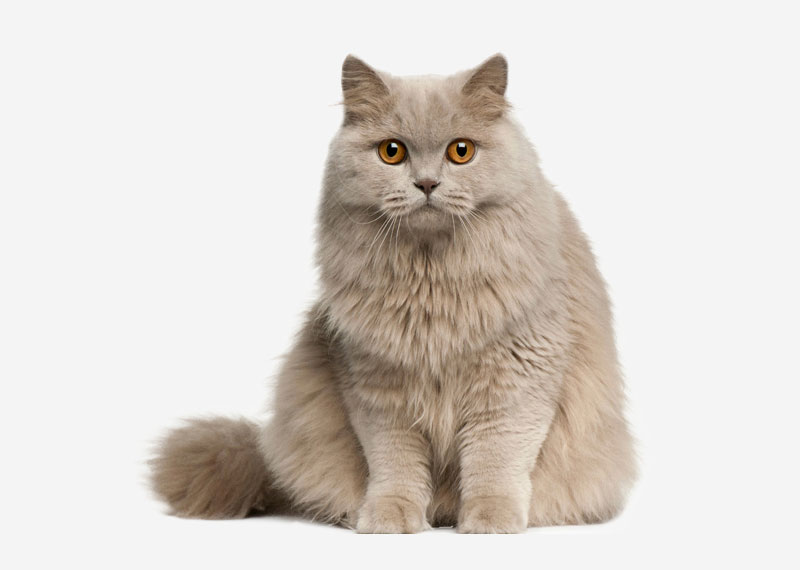 Has your kitty's fur gotten matted and dirty? When your cat sheds fur from her coat, it can become tangled in the rest of the fur if not brushed away. This, along with sticky dirt, forms mats that not only are unattractive, but can cause your little one serious discomfort.