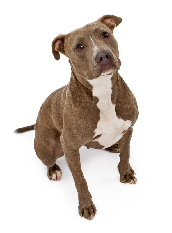 Any Type Of Dog Banned In Ontario