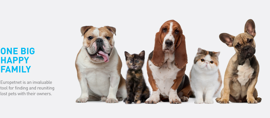 Image result for search on pet website