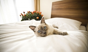 Pet Friendly Lodging Guide