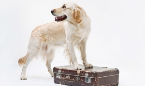Quick Travel Tips - Dogs